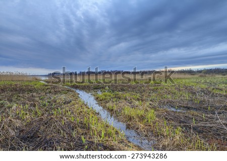 Thunderclouds on a sunset over a bog. A strong wind and a thunder-storm in the wood on a bog in the spring on a sunset. Dark dramatic rain clouds over countryside landscape. Spring in Russia.