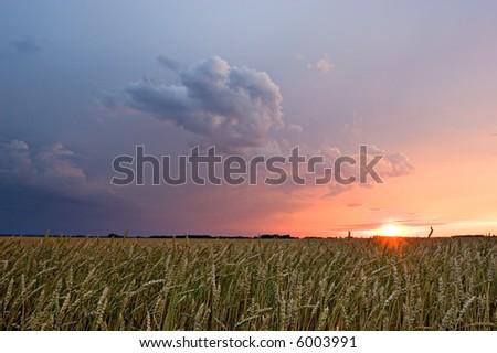 Thunderstorm sunset over grain fields - stock photo