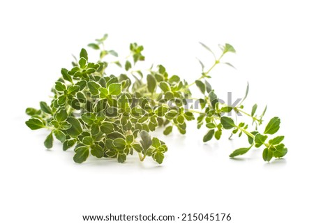 Thyme branch isolated on white - stock photo