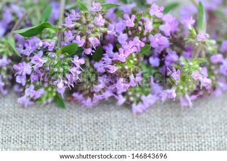 Thyme flowers on sackcloth - stock photo