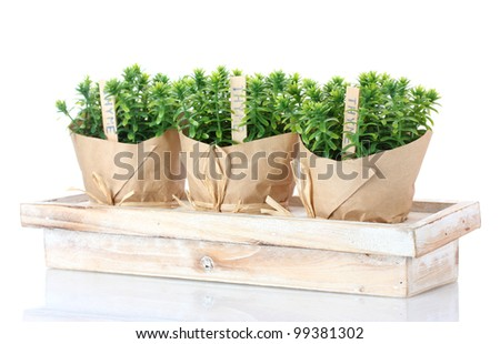 thyme herb plants in pots with beautiful paper decor on wooden stand isolated on white - stock photo