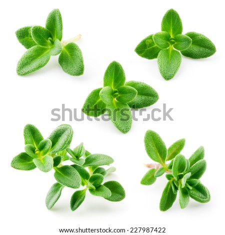 Thyme isolated on white background. Macro - stock photo