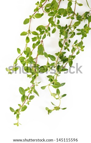 Thyme on white background
