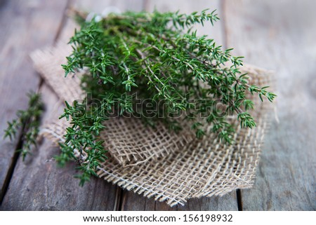 Thyme , Selective focus - stock photo