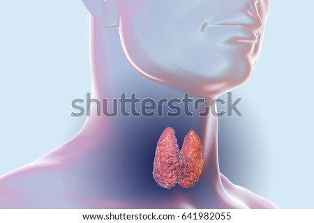 Thyroid Gland Inside Human Body 3 D Stock Illustration 641982055 ...