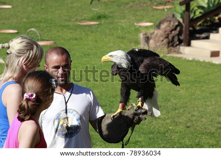 TIAS, SPAIN - DECEMBER 3 : Unidentified girls close up look at a Bald Eagle standing on a falconer's hand on December 3, 2010 in Rancho Texas Park, Tias, Lanzarote, Spain. - stock photo