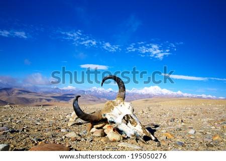Tibetan landscape with yak bones and snow mountains - stock photo
