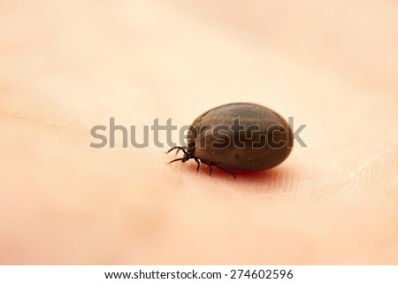 Tick is crawling on the human palm - stock photo