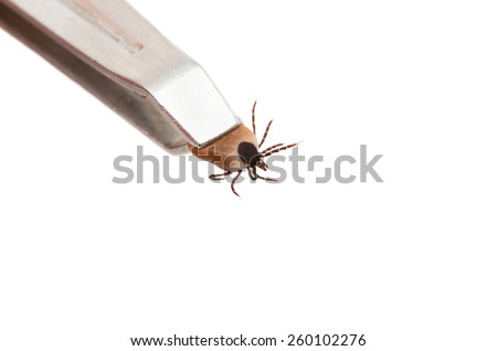 Ticks, isolated on a white background - stock photo