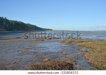 tidal flat - stock photo