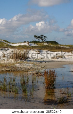 Tide Pool in the White Sand Beach of Florida - stock photo