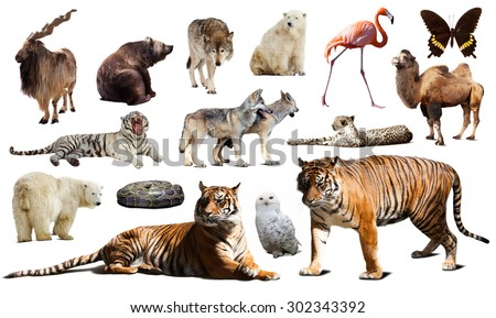 Tiger and other asian fauna. Isolated on white background  with shade - stock photo