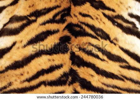 tiger beautiful texture of real fur, wild cat pelt - stock photo