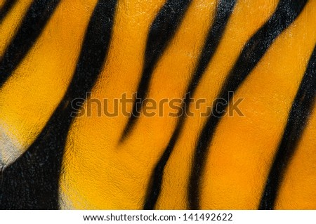 Tiger cement - stock photo