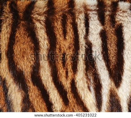 tiger fur background - stock photo