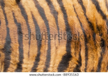 Tiger fur background - stock photo