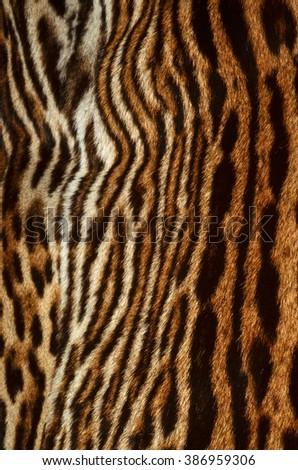 tiger fur background texture - stock photo