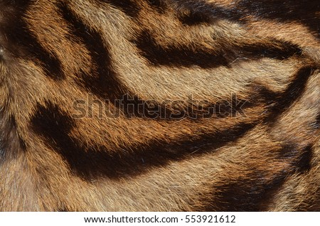 tiger fur background texture