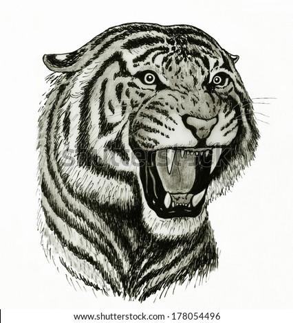 Tiger head drawing - photo#4