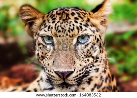 Tiger in Zoo Thailand - stock photo