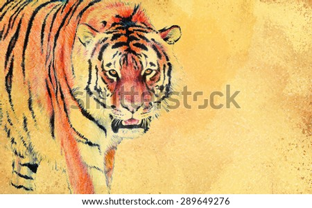 tiger on vintage yellowed brown paper with copyspace, tiger is hand painted watercolor illustration, striped black and orange fur - stock photo