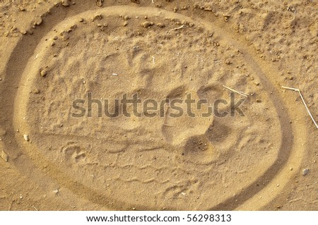 tiger paw  print in the sand circled - stock photo