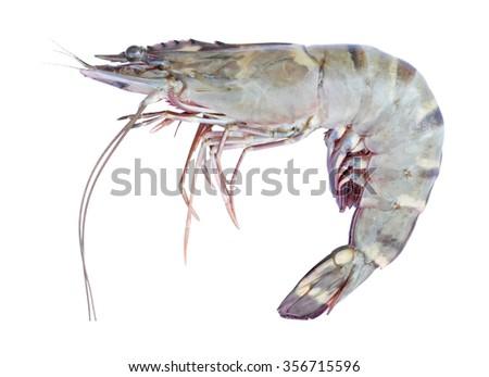 Tiger prawn isolated on white - stock photo