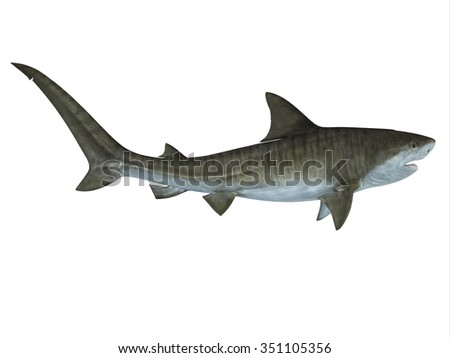 Tiger Shark Side View - The Tiger shark is a large predatory fish that lives in temperate and tropical ocean waters.  - stock photo
