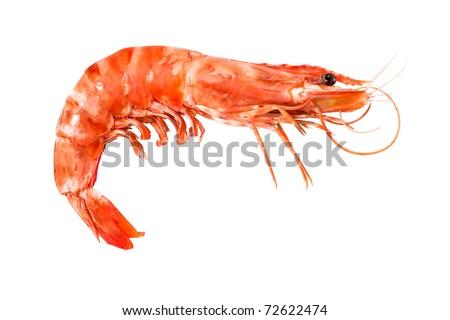 tiger shrimp isolated on white - stock photo