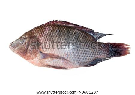 Tilapia fish isolated - stock photo