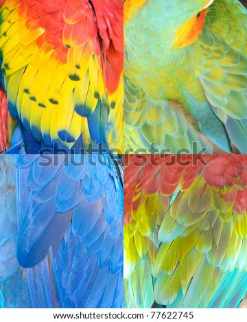 tiled abstract collection of colorful Macaw parrot bird feathers with red,green,yellow&blue patterns&textures as animal background. feathers from scarlet,northern green winged,military&hyacinth macaw - stock photo