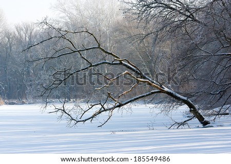 tilted tree in winter forest, landscape - stock photo