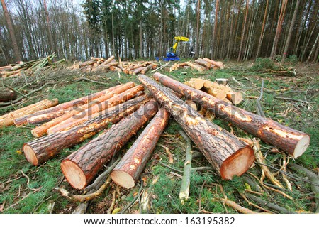 Timber and harvester on the background. - stock photo