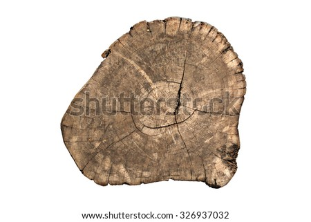 Timber cut section on white background