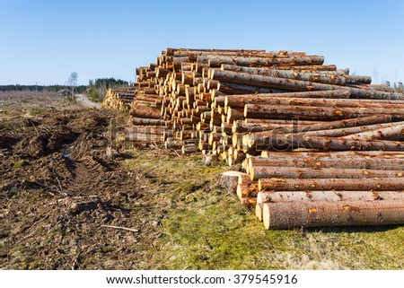 Timber located at a clearcut area - stock photo