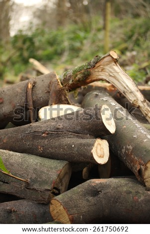 timber logs after restoration works in a park - stock photo