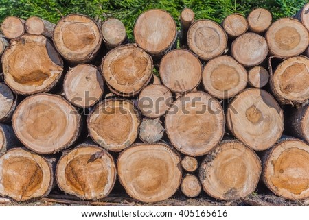 Timber Lumber Industry. Fresh Wood Logs Awaiting Transportation in the Forest. Production of Forest Wood Products. Timberland. - stock photo