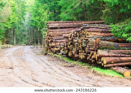 Timber stack by the road in the forest - stock photo