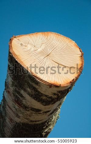 Timber storage - stock photo