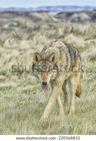 Timber wolf in North Dakota Badlands - stock photo
