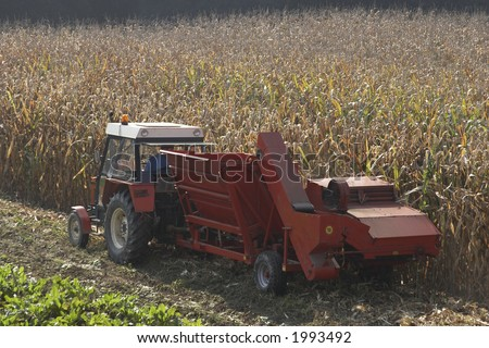 Time for corn - stock photo