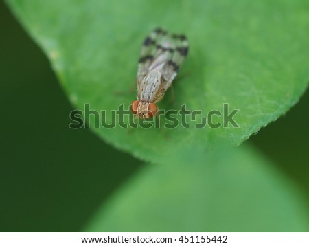 tiny baby house fly perched on small green leaf close up - stock photo