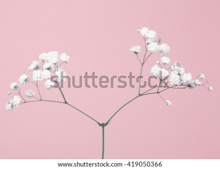 Tiny baby's-breath flower (gypsophil) on a soft pink background  - stock photo