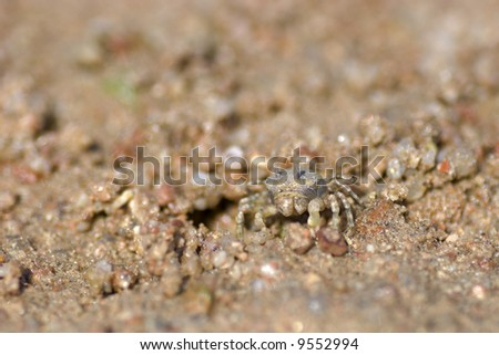 Tiny crab standing on red sand looking at you - stock photo