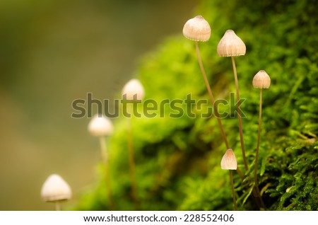 Tiny creatures on a mossy forest ground - stock photo