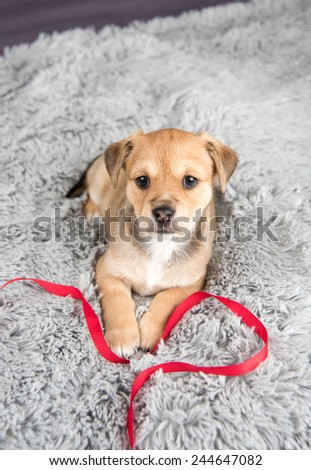 Tiny Fawn Mixed Breed Puppy on Fluffy Blanket - stock photo