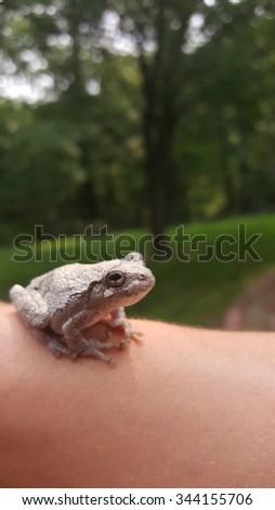 Tiny frog  - stock photo