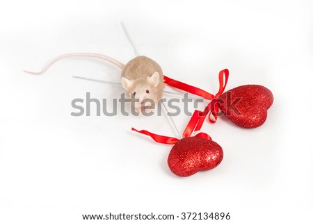 Tiny golden mouse sits on a white background next to two shiny decorative red hearts. He has lovely paws and a long tail - stock photo