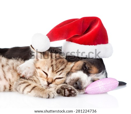 Tiny kitten and basset hound puppy in red santa hat. isolated on white background - stock photo