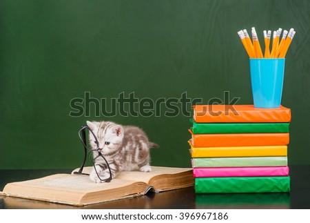 Tiny kitten playing with glasses near empty chalkboard - stock photo